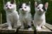 Aos marinheiros de primeiro gato!!!