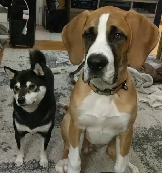 Knight & Oswald