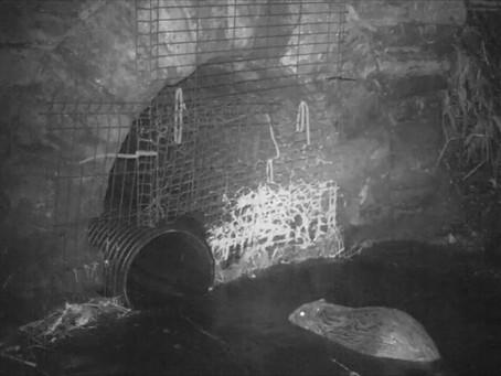 Network Rail builds Scotland's first 'Beaver tunnel' under the Highland mainline