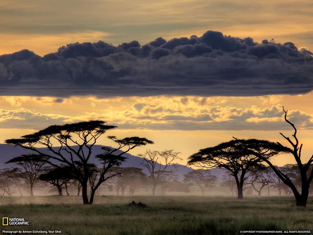 Acacia Trees.jpg