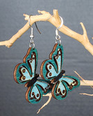 Turquoise Butterfly Cutouts.jpg