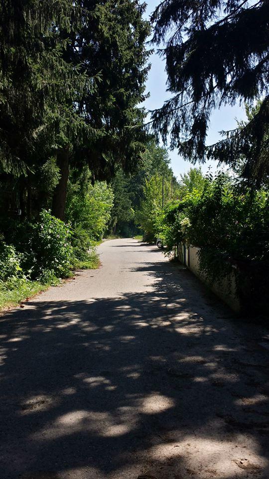 Gang Wald