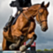 horse at jumping competition.jpg