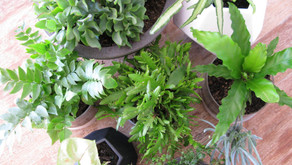 Tips on caring for your indoor plants