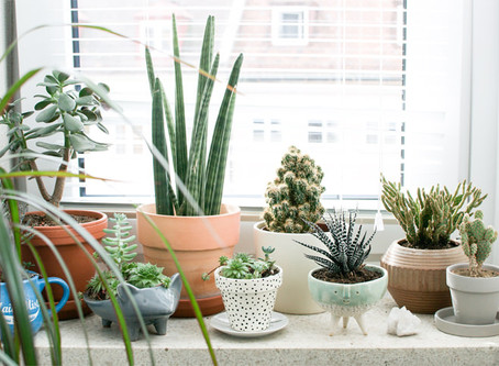 Indoor plants & recognising their call for help