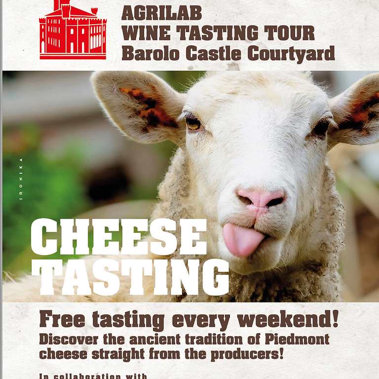 Barolo Cheese Tasting!