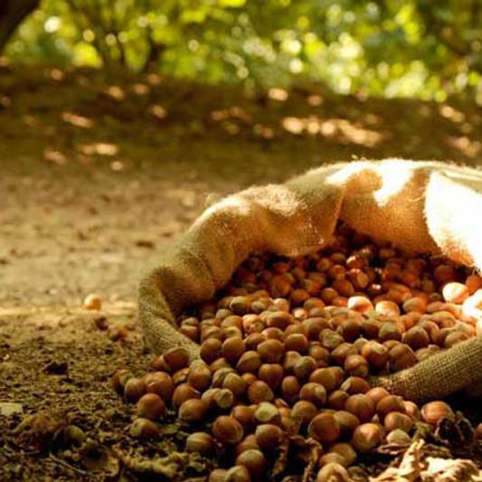Free TASTING DAY: Hazelnut