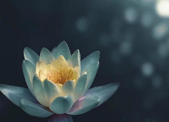 Anima-Pure Peace