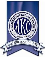 american kennel club breeder