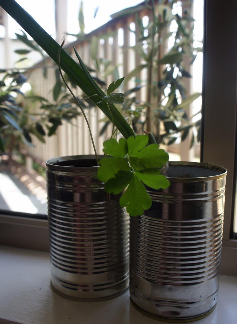 Used tin planters