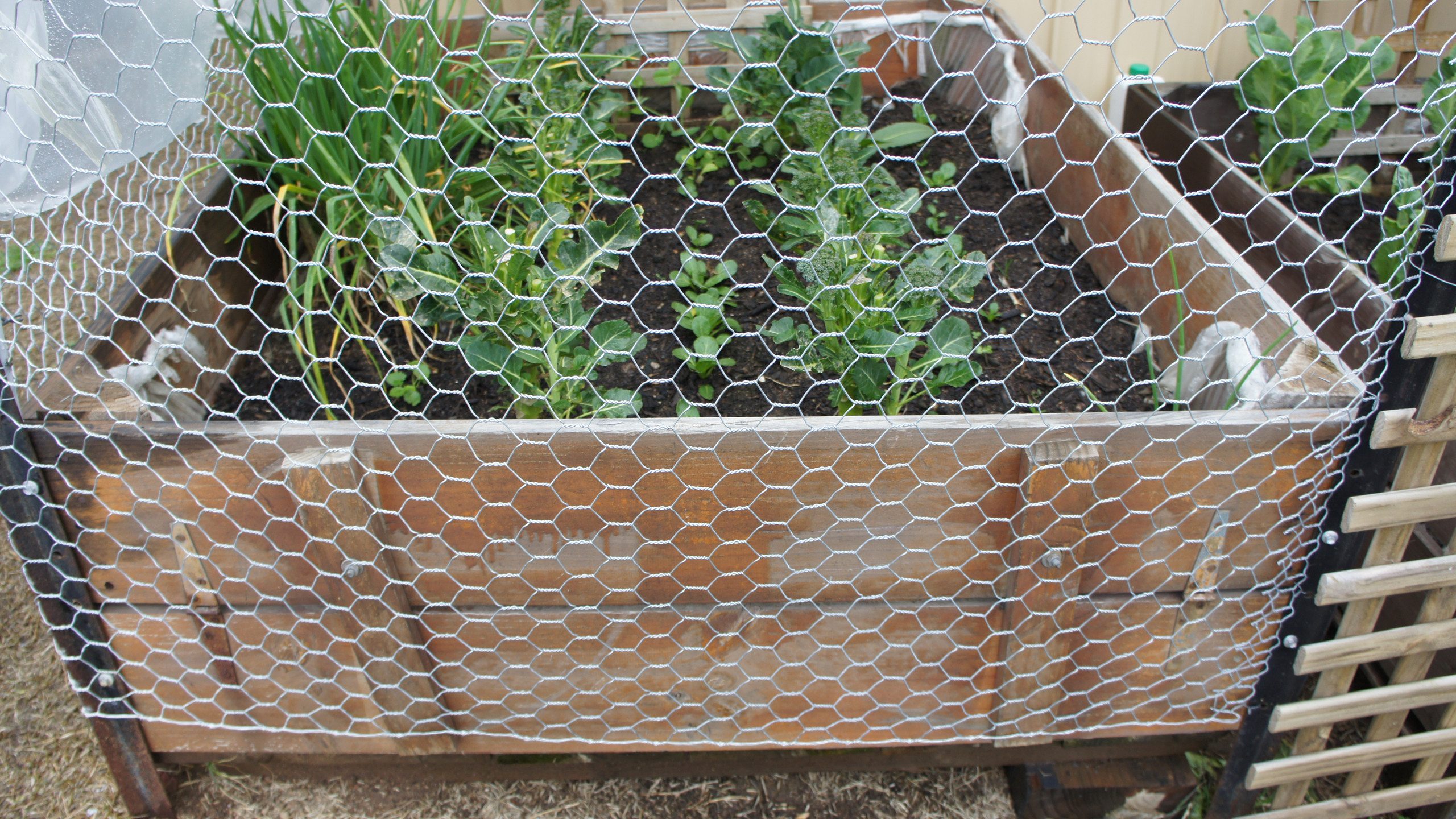 Upcycled fruit bins as veggie patch