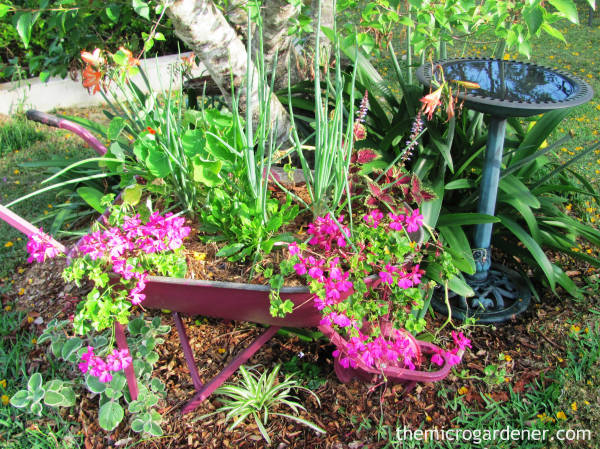 Wheelbarrow herb and flower planter