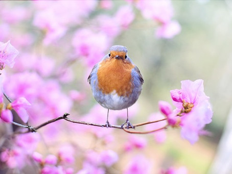 Take time to notice nature this Mental Health Awareness Week