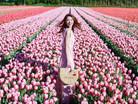 荷蘭必到的打卡勝地 | 外國KOL們從不公開地址的神祕花田!