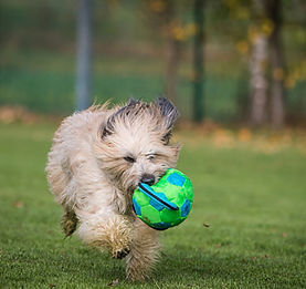 Dogchamer_Rabbit-Chaser_02.jpg