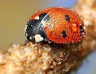 ladybird closeup.jpg