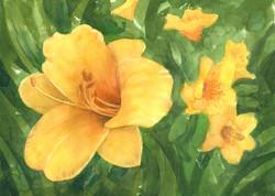 Halcyon Days and Daylilies