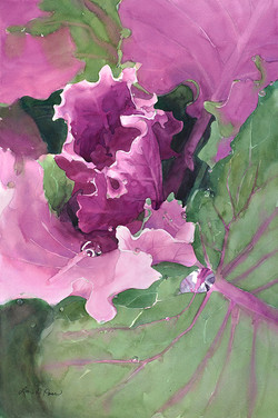 Cabbage in Seward