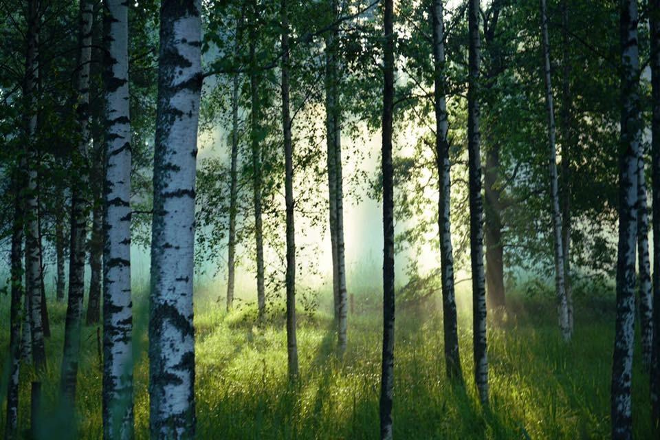 Metsä kokousympäristönä