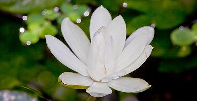 Dvasinis tiesinimas atsiliepimai
