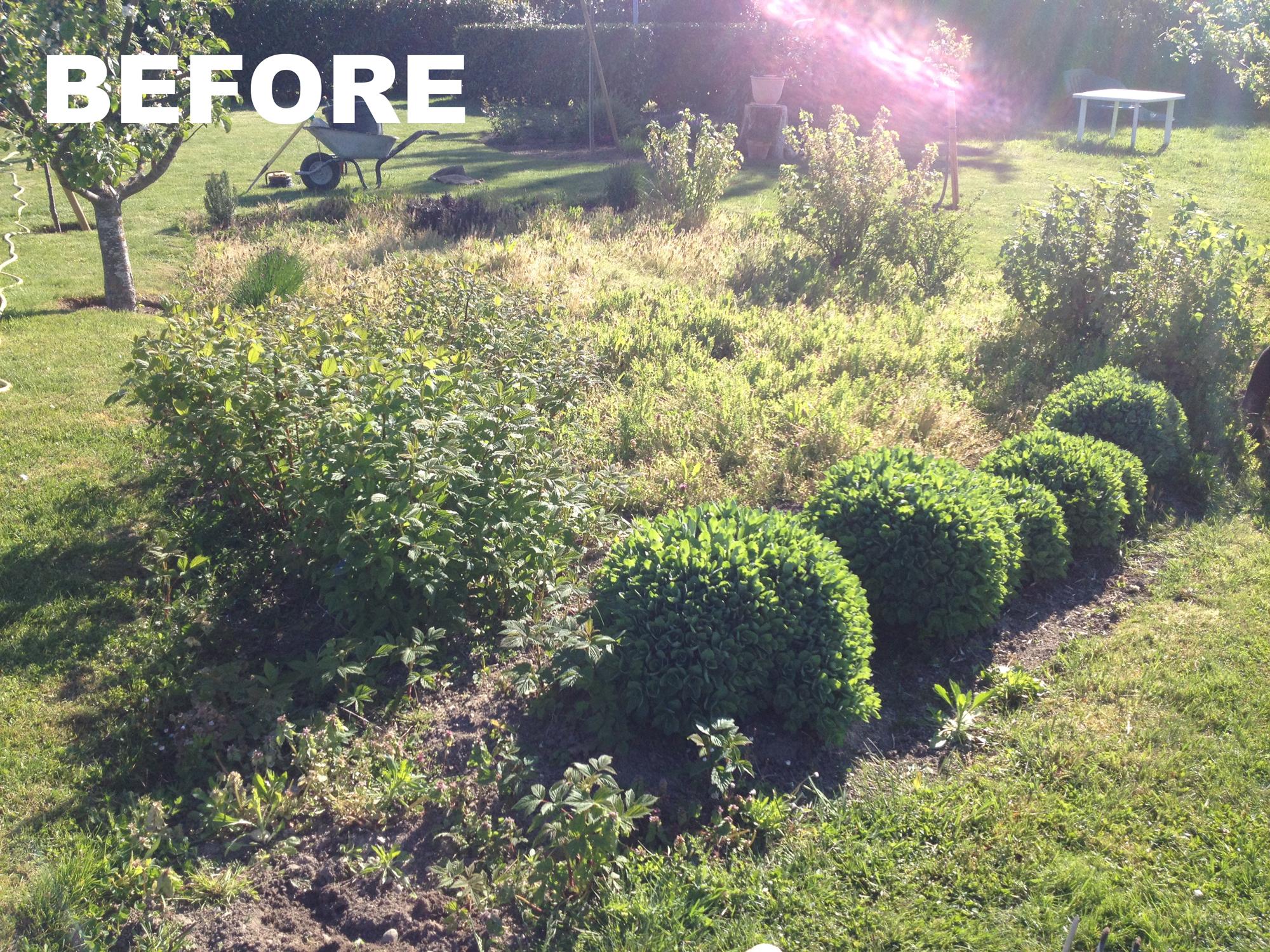 Garden Maintenance (before)