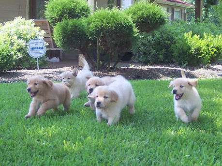 puppiesrunning.jpg