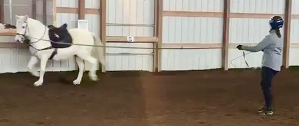 white horse lunging.png