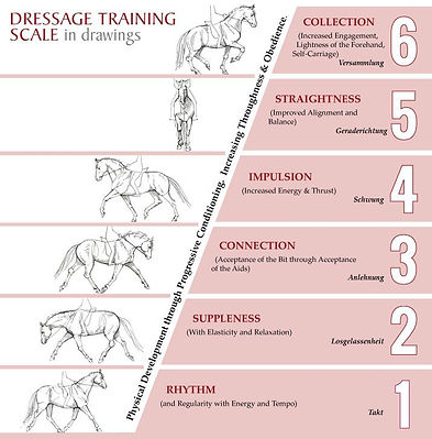 Dressage Training Scale.jpg