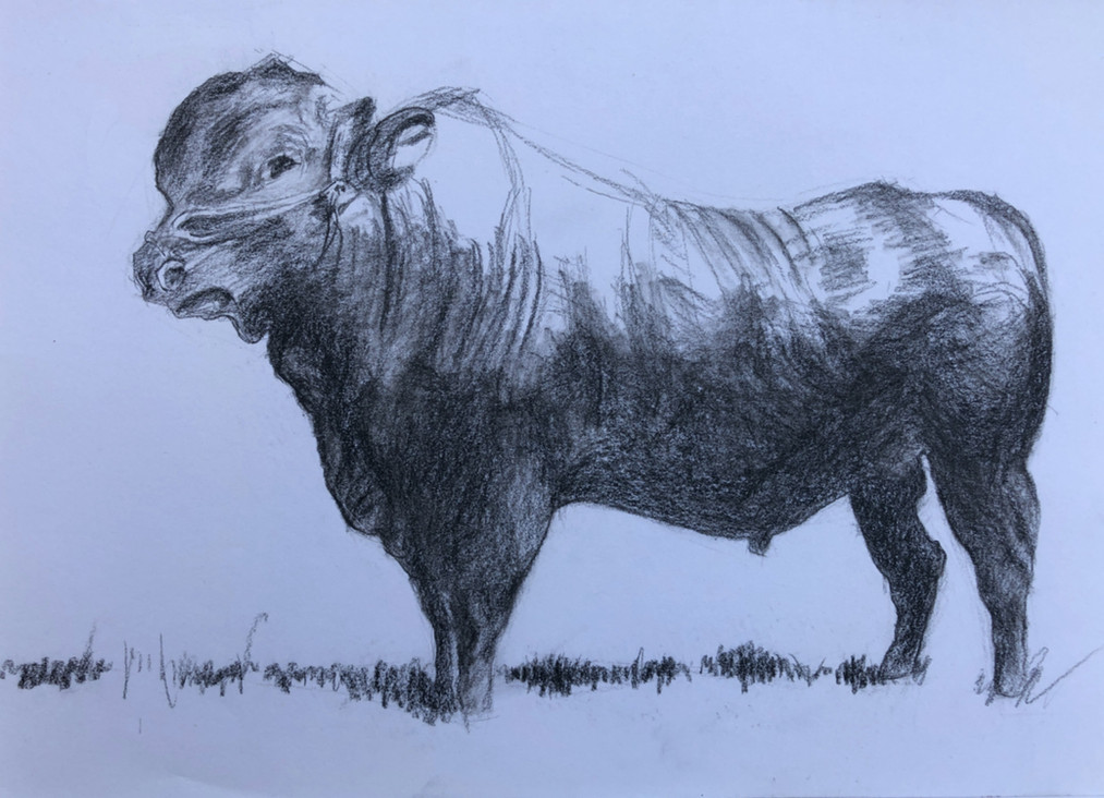 Sketch - Cow (2017)_Small.jpg