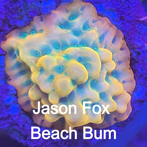 Jason Fox Beach Bum