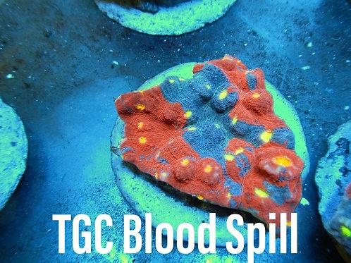 TGC Blood Spill
