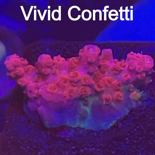 Vivid Confetti