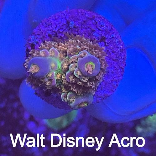 Walt Disney Acro