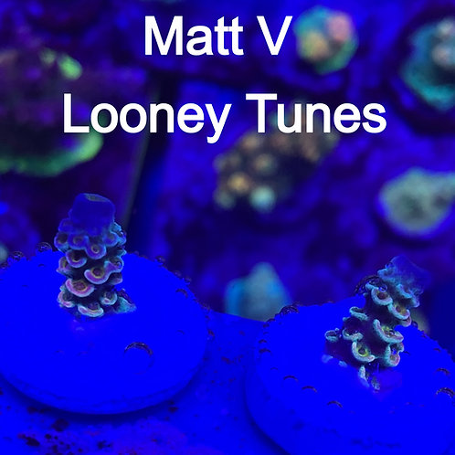 Matt V Looney Tunes