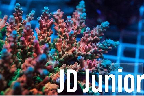 JD Junior