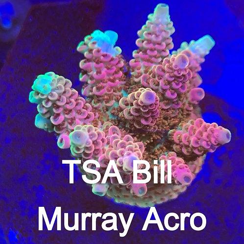 TSA Bill Murray Acro