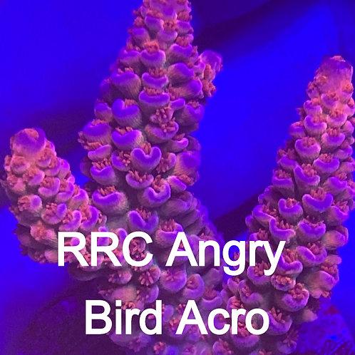 RRC Angry Bird Acro