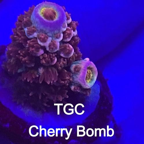 TGC Cherry Bomb