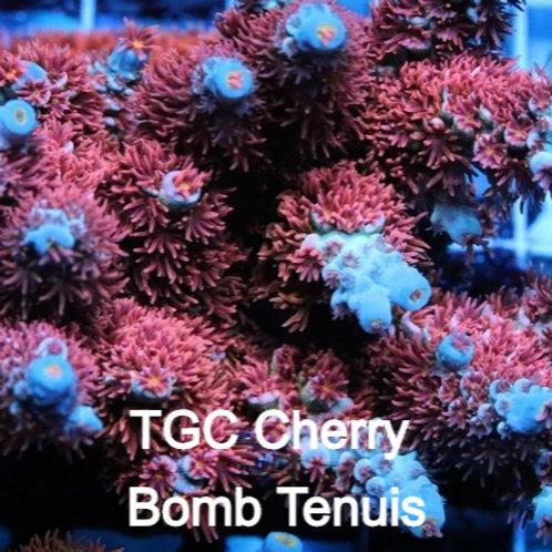 TGC Cherry Bomb Tenuis