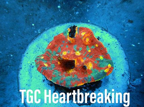 TGC Heartbreaker