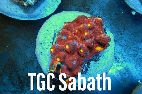 TGC Sabbath
