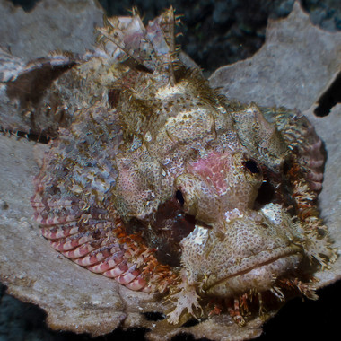 Skorpionfisch-4044.JPG