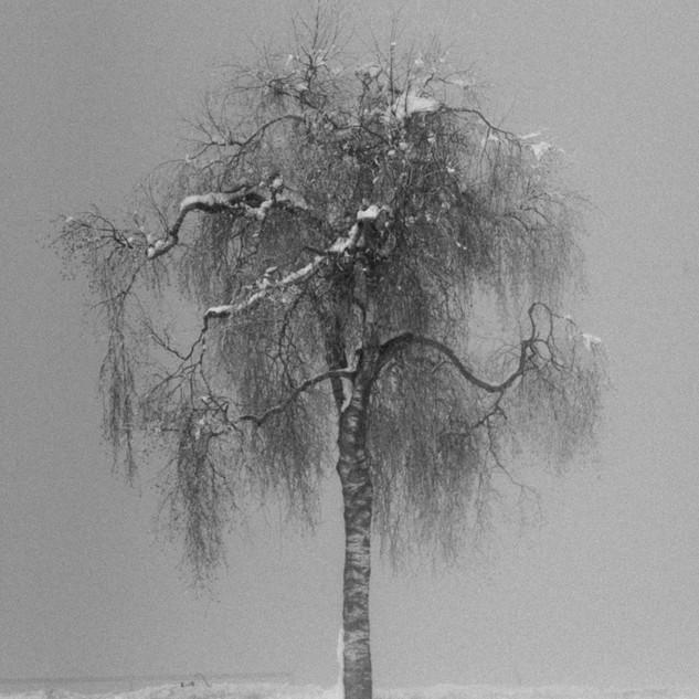 Baum-06505.jpg