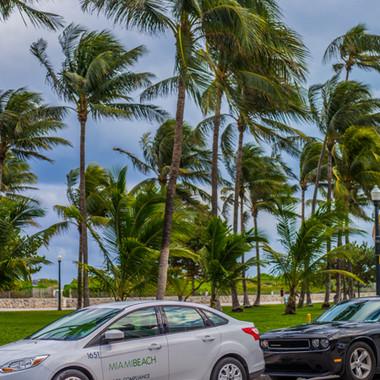 Palmen Miami Beach