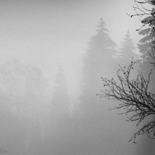 Schatten-06504.jpg