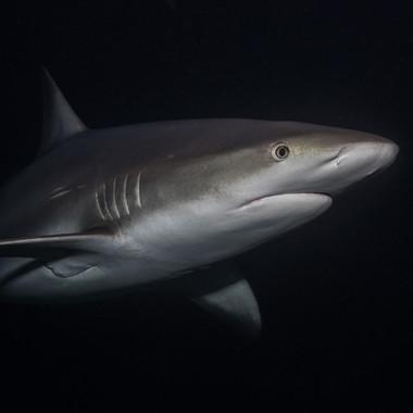Speziell waren die Nachttauchgänge. Da ging echt die Post ab. Hautnah mit all den Haien. Ein super Erlebnis.