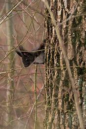 Eichhörnchen-06517.jpg