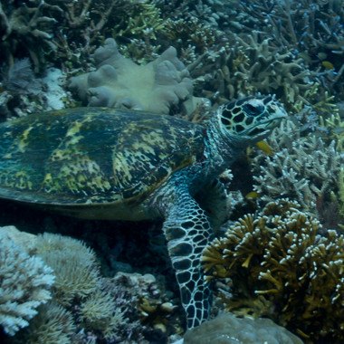 Schildkröte-2348.JPG