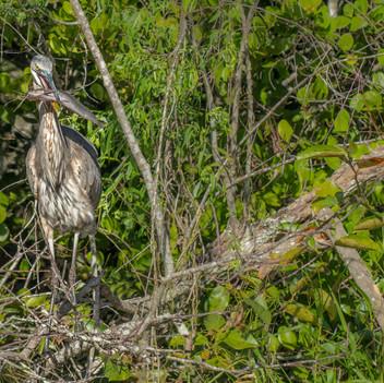Fischfrüstück_in_den_Everglades-6624.jpg