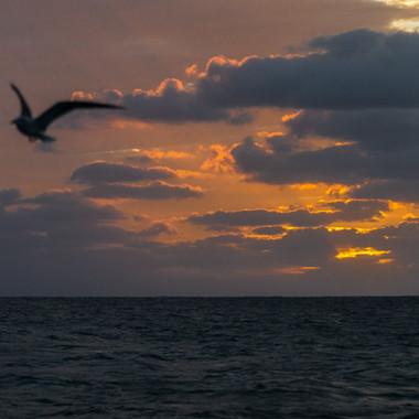 Allzu schnell vergingen die Tage und eh man sich versah stand bereits der Sonnenuntergang an. Auch auf dem Schiff lohnte es sich die Augen offen zu halten.